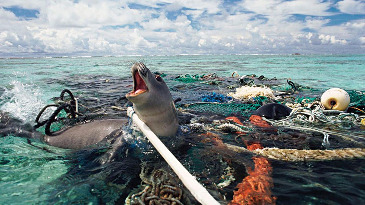 Otpad Unistava Zivot u Okeanima